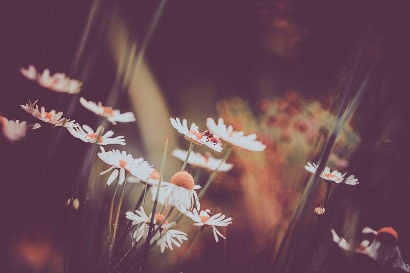 bloemen van michel nolsen