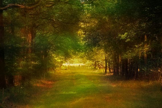 in the forest van Yvonne Blokland