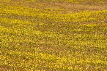 Veel geel en een dotje rood. van Rens Kromhout