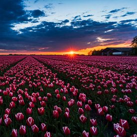 zonsondergang tulpenveld van Rick Kloekke