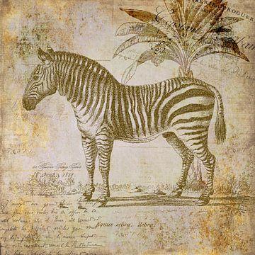 Vintage Zebra von