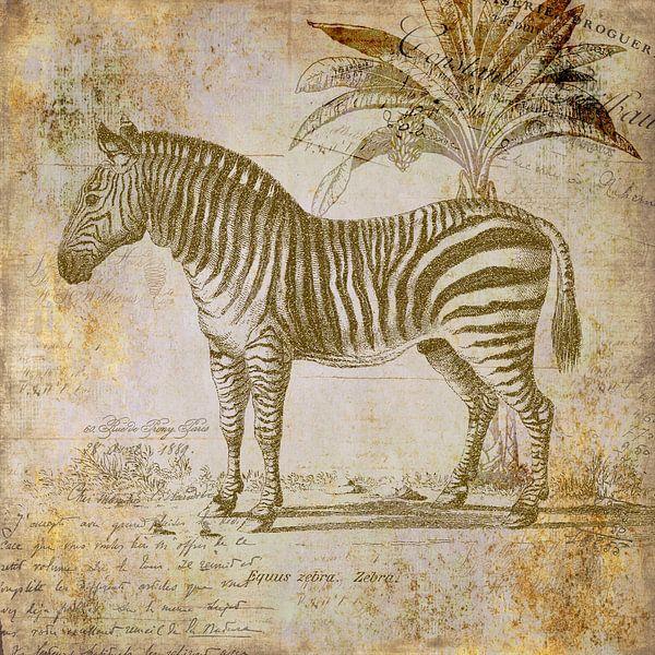 Vintage Zebra sur Andrea Haase