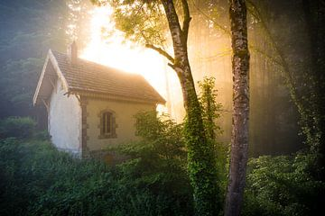 Dreamy forest van Karel Ton