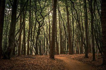 Zomaar een bos. van Adri Vollenhouw