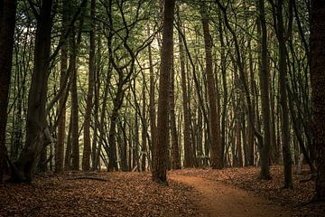 Juste une forêt sur Adri Vollenhouw