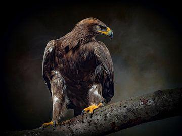 L'aigle de la savane sur Natascha Worseling