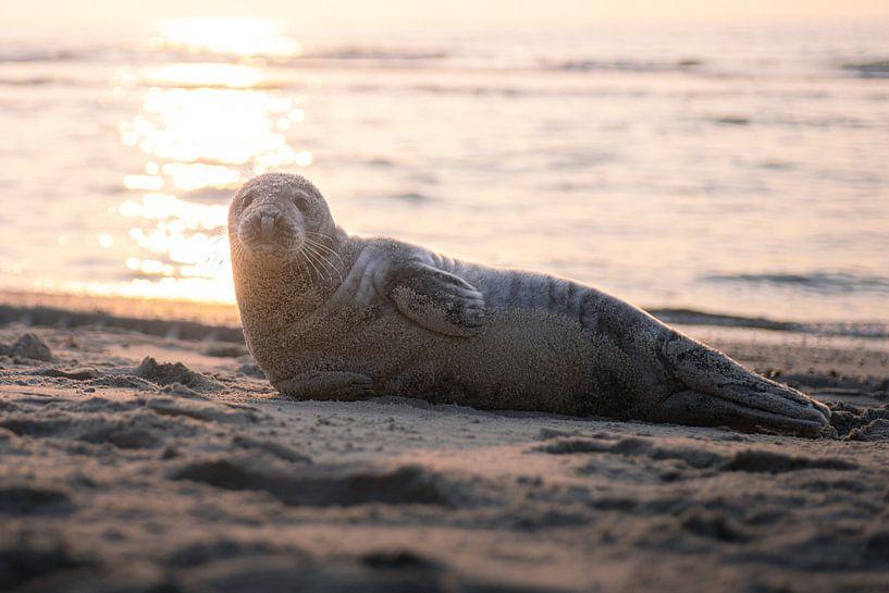 Luieren op het strand van Thom Brouwer