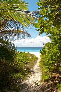 Tropisch doorkijkje naar wit strand en azuur blauwe zee van