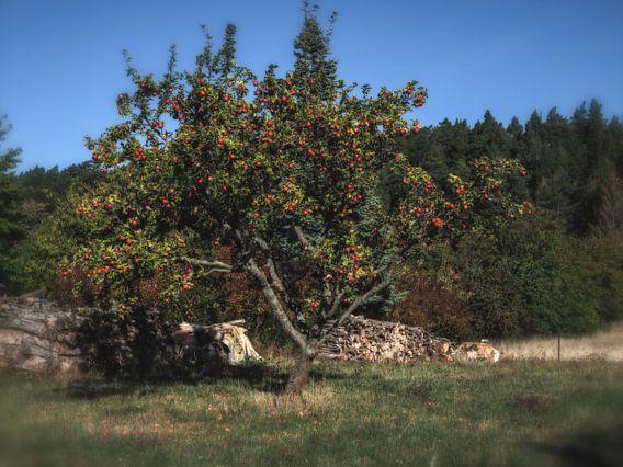 Allein stehender Apfelbaum auf dem Weg zum Hamburger Wappen
