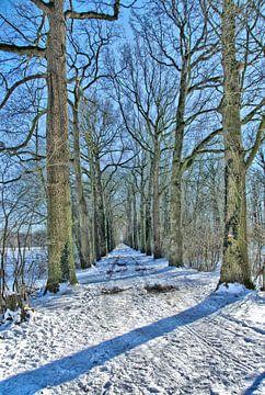 Een bospad op een winterse middag. van Jurjen Jan Snikkenburg