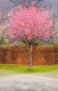 Multishot japanese cherry tree