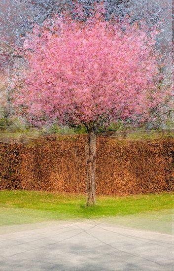 Multishot japanese cherry tree van Patrick LR Verbeeck
