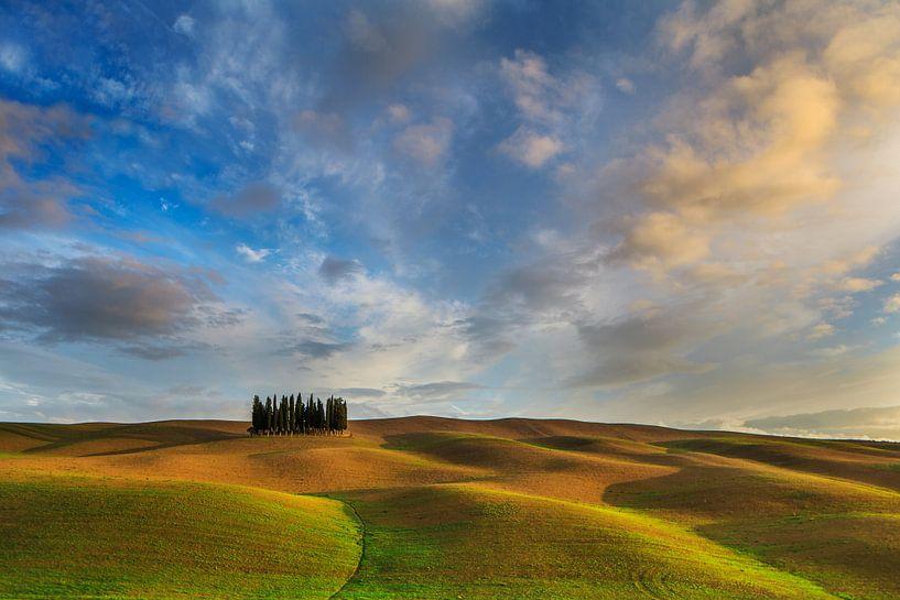 Golden Tuscany van Marc Smits