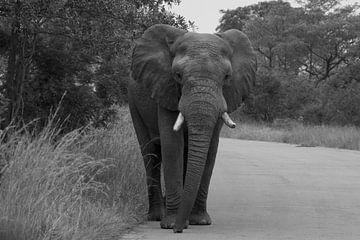 Zwart wit foto Olifant van Wesley Klijnstra
