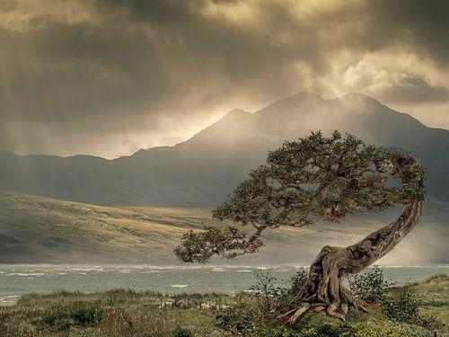 Desolaat landschap van Ton Buijs