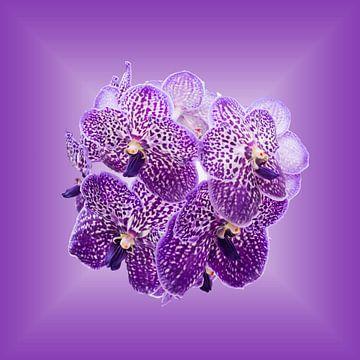 Orchideeën op purper achtergrond. van Wunigards Photography