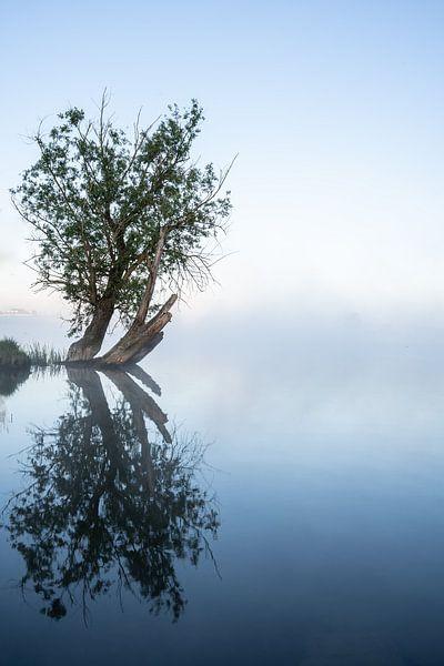 Reflecterende boom van Albert Lamme
