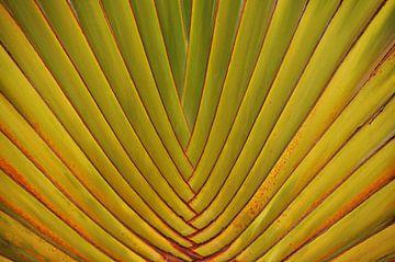 Palm Leaf van Ioana Hraball