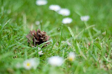 Dennenappel in het gras sur Anita van Hengel