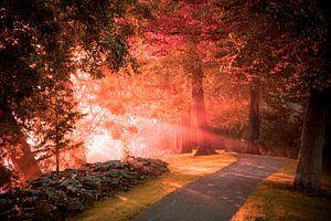 Bonjour soleil matinal
