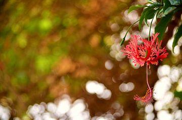 Egyptische bloem van