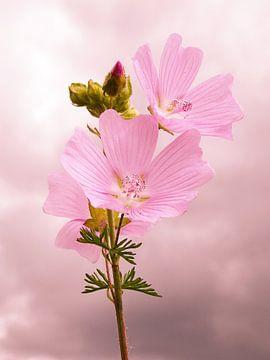 Les Fleurs Roses sur Fayola Henderikse