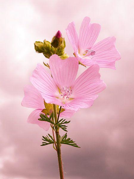 Roze Bloemen van Fayola Henderikse
