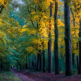Abendliches Licht. von Robin Pics (verliefd op Utrecht)