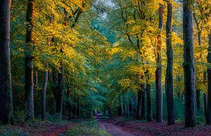 Avond licht. van Robin Pics (verliefd op Utrecht)