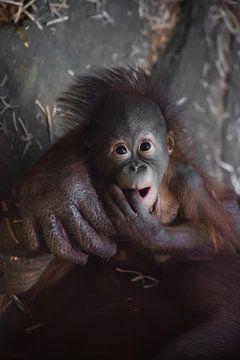 Grappige babyuitstraling. Een schattige kleine borst orang-oetan baby en een grote betrouwbare hand  van Michael Semenov
