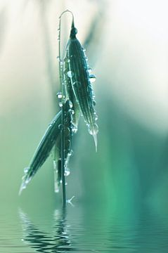 Dewdrops sur Violetta Honkisz
