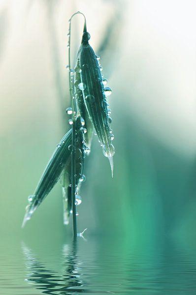 Dewdrops van Violetta Honkisz