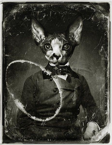 Sphynx kat in vermomming