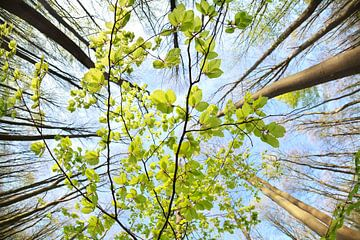 Spring freshness sur Olha Rohulya