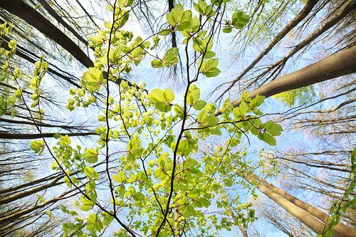 Spring freshness van Olha Rohulya