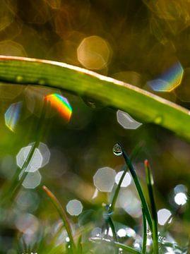Ochtenddauw met regenboogfakkels van Elke Holinski