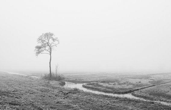 Eenzaam in de mist van Raoul Baart