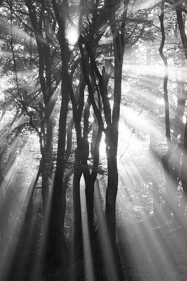 zonsopkomst door de bomen van Arjan Keers