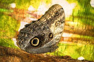 rustende vlinder in het  regenwoud van