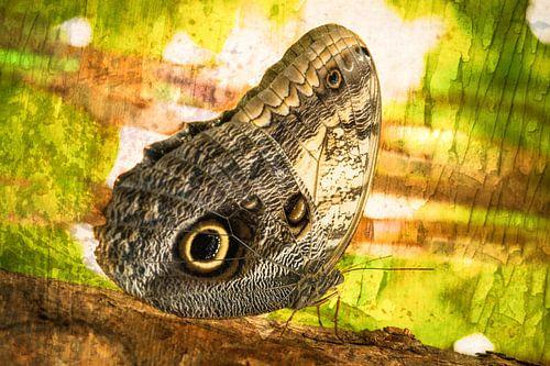 rustende vlinder in het  regenwoud