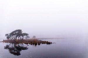 Spiegeling in de mist, Strijbeek, Strijbeekse heide, Noord-Brabant, Holland, afbeelding mist van