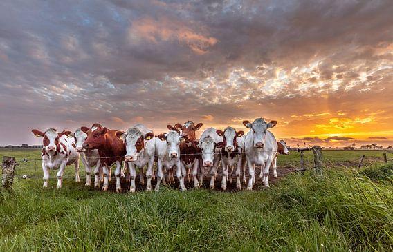 Koeien met zonsondergang van Ben Bokeh
