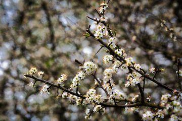 Weiße Blüte von Bart Verdijk