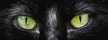 Door de ogen van de kat (panorama) van Fotografie Jeronimo