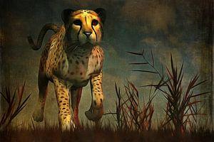 Dierenrijk – Cheetah  komt recht naar je toe tijdens de jacht