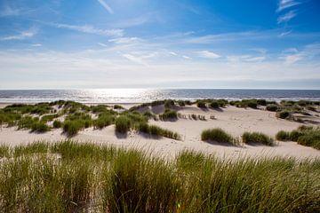 Duinen bij Schoorl aan Zee van