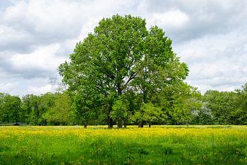 Buitenplaats Het Huys ten Donck: Baum auf dem Feld von Rick Van der Poorten