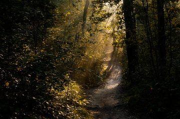 Erste Sonnenstrahlen im Wald von Henk Elshout