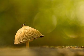 Op een grote paddenstoel sur