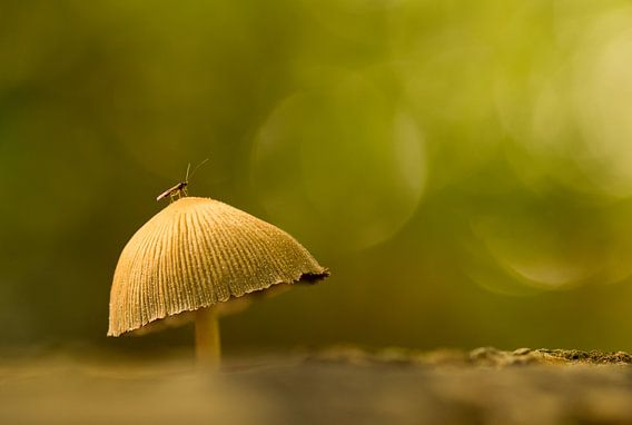 Op een grote paddenstoel van Renske Breur